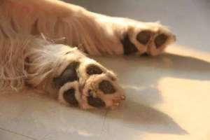 怎么从狗狗睡觉姿势看出他的性格