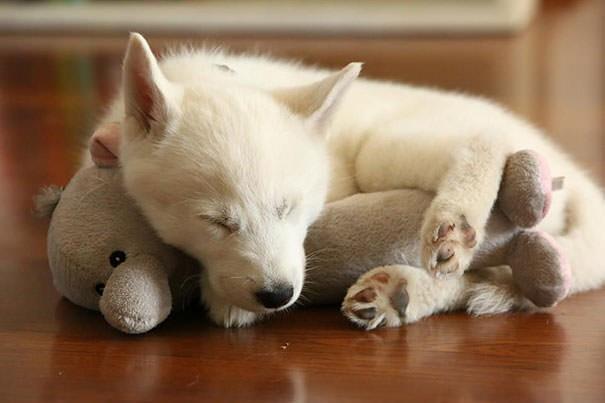 狗狗睡觉姿势缩成一团